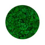 Grass green moss