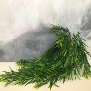 Куст бамбук «дор»
