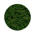 Medium green moss купить в минске мох