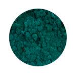 Pacific Green Moss купить в минске мох