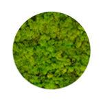 Spring green Moss купить картину из мха в минске мох