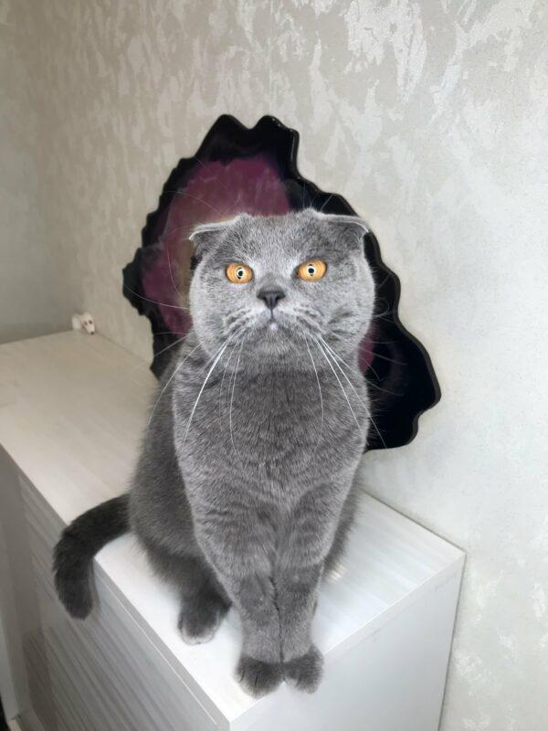 Кот на фоне картины