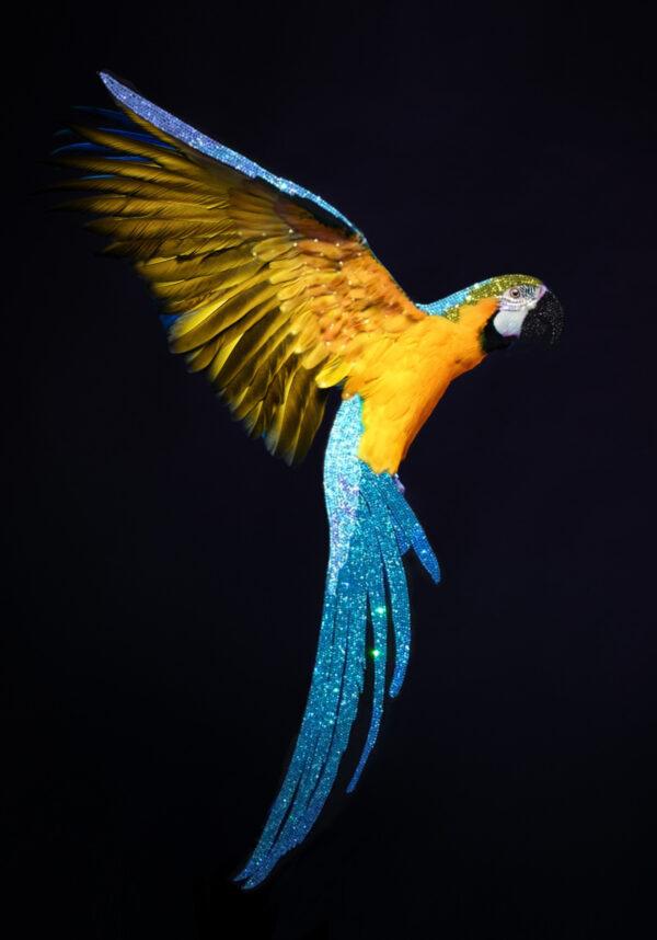 Ювелирное декоративное панно премиум класса Попугай со стразами (По мотивам Мишель Астолфи (Visionnaire Michele Astolfi)